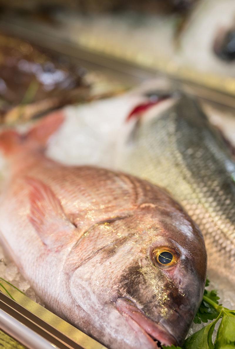 Fresh Seafood - Seafood Restaurant Almyvita- Chania- Almirida Region